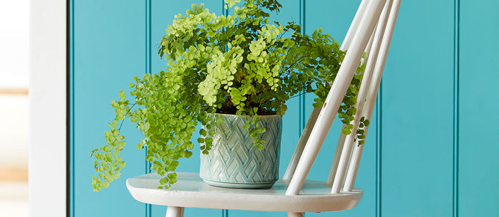 Houseplants are hot news… and Burgon & Ball is top of the pots!