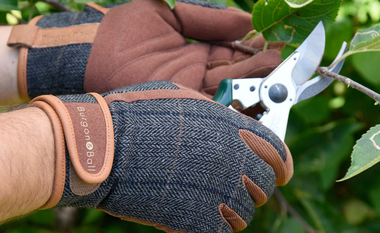 Make Dad's day with gardening gifts for green-fingered fathers