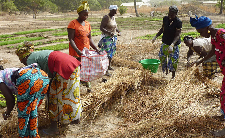The women gardeners of Mbollet Ba (or, How a little compost can change your life)
