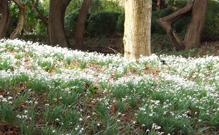 Dorset's Kingston Lacy: spring's in full swing