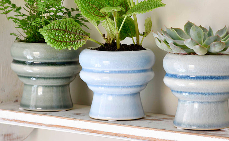 Stylish new looks in indoor pots