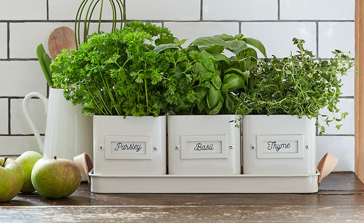 Grow herbs on your windowsill for a burst of sunshine in winter
