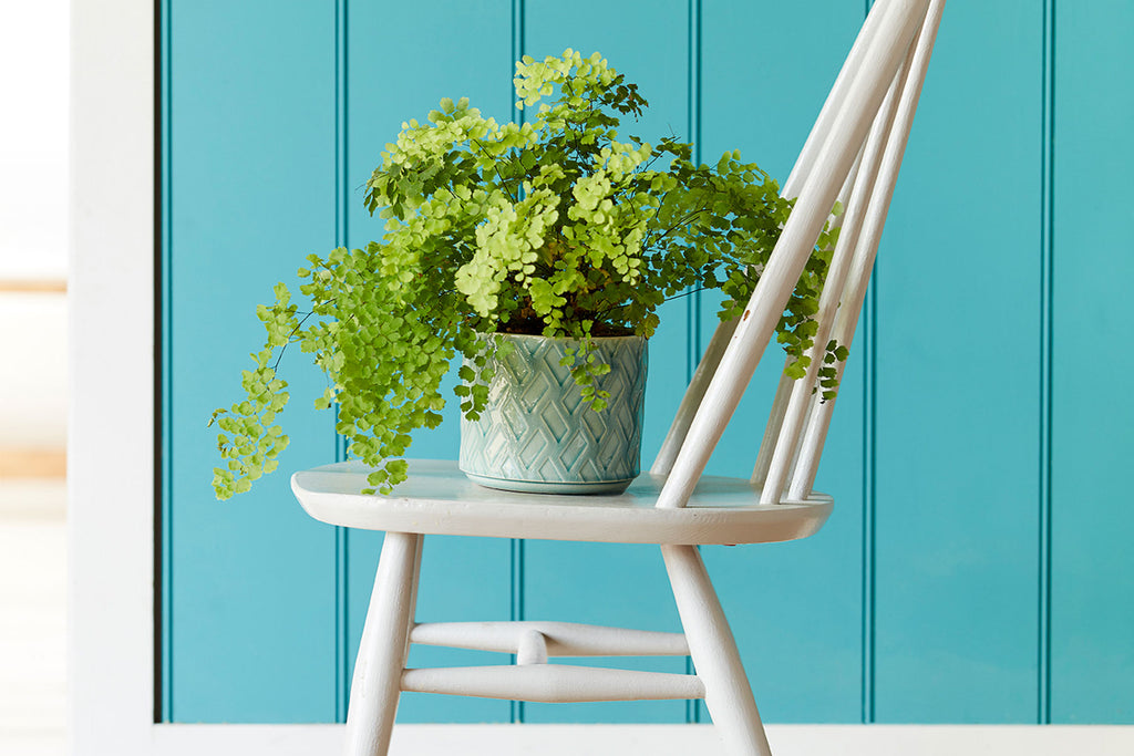 Indoor pots from Burgon & Ball will make Mum's day