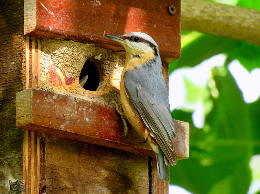 Garden birds are looking for a home for their chicks