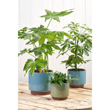 Malibu indoor pots by Burgon & Ball