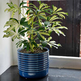 Oslo glazed indoor plant pot, large, blue, by Burgon & Ball