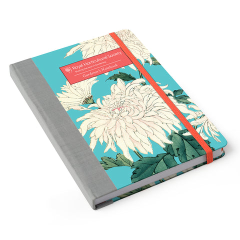 Chrysanthemum Gardener's Notebook