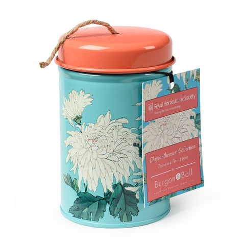 Chrysanthemum Twine in a Tin