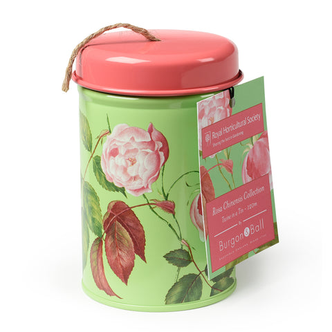 Rosa Chinensis Twine in a Tin
