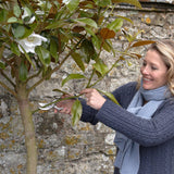 Sophie Conran for Burgon & Ball secateur for gardening. Garden pruner.