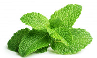Go Fresh Mint 40 G Ea