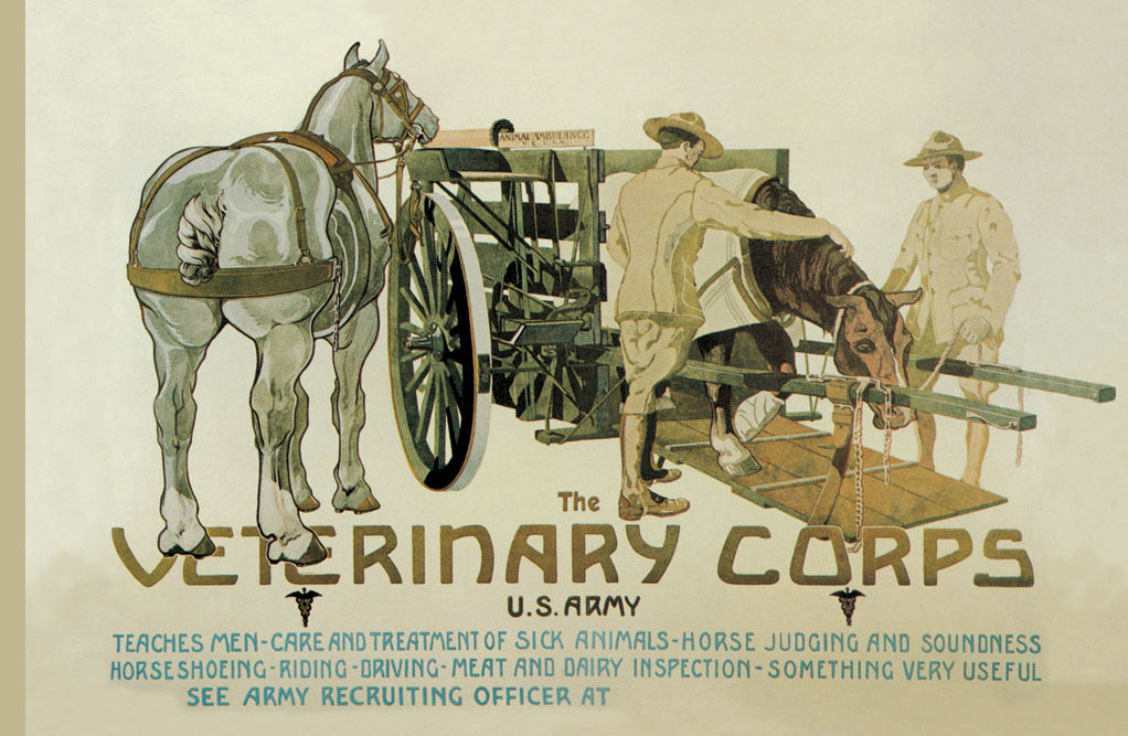 THE VETERINARY CORPS. U.S. ARMY