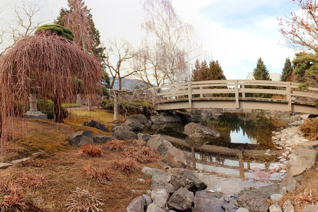 Japanese Garden in Winter