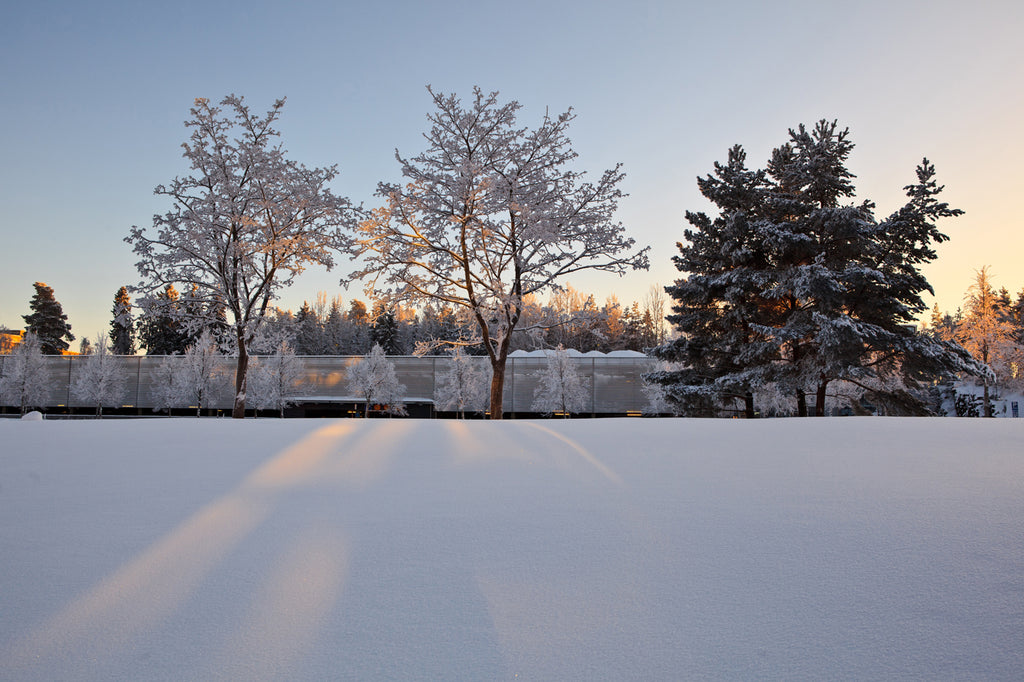 Winter Sunset on Snow-Covered Trees