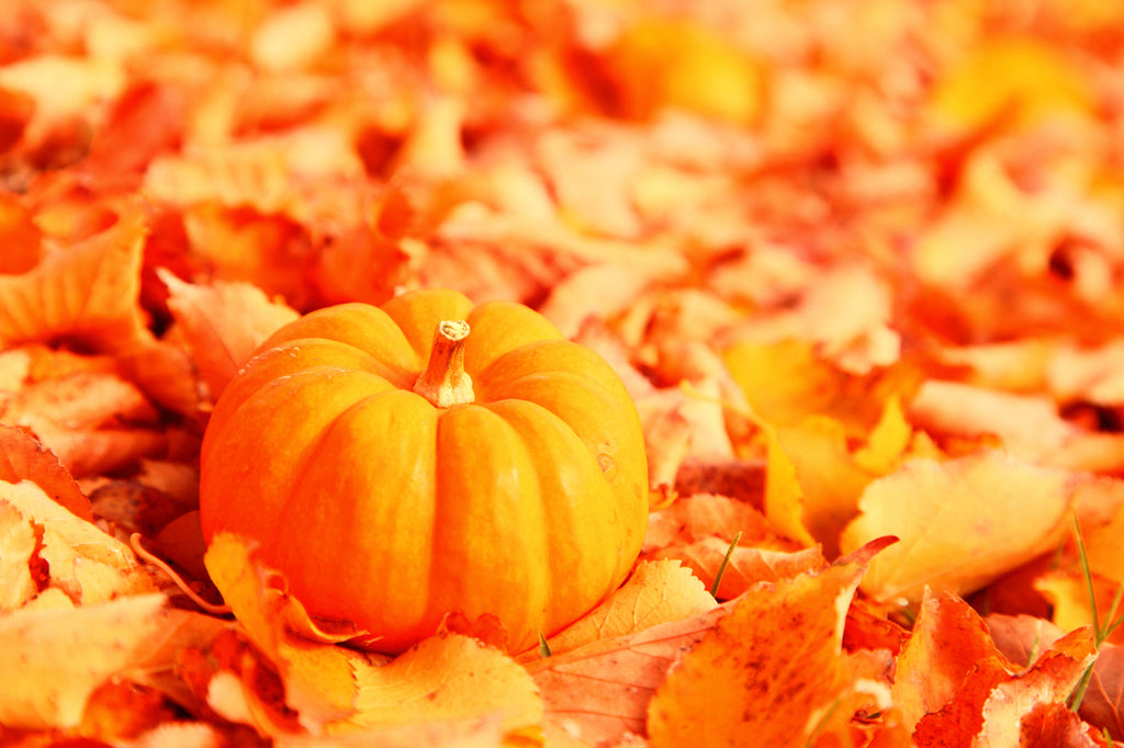 Little Pumpkin and Fall Foliage