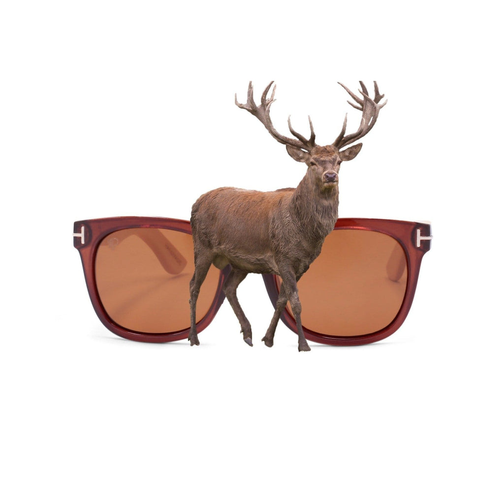 PULSE SUNGLASSES DEER Buy Perfect Brown Lens Polarized Sunglasses | DEER