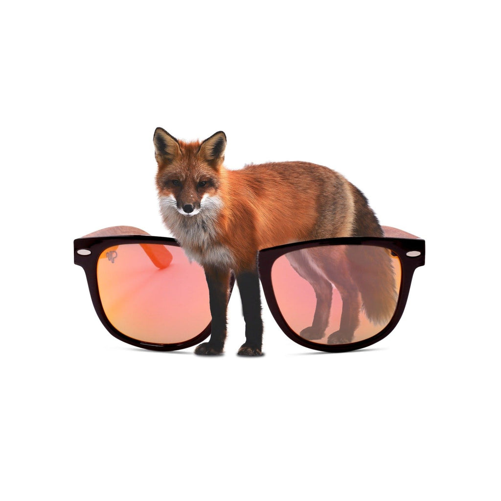 PULSE SUNGLASSES RED FOX Buy Value Optical Quality Sunglasses Online | RED FOX
