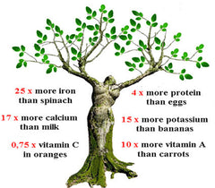 Moringa Miracle Tree