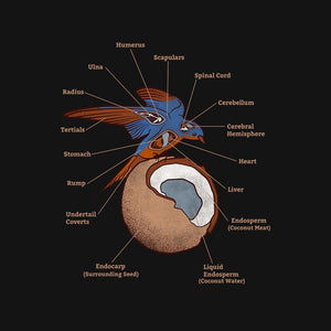 Anatomy Of a Swallow