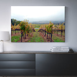 Canvas Wall Art Of A California Vineyard 4 Sizes To Choose From-And He Cooks