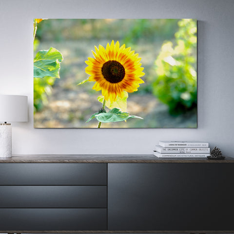 Canvas Wall Art Of A Sunflower 4 Sizes To Choose From-And He Cooks