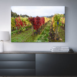 Canvas Wall Art OF Vineyard In Autumn 4 Sizes To Choose From-And He Cooks