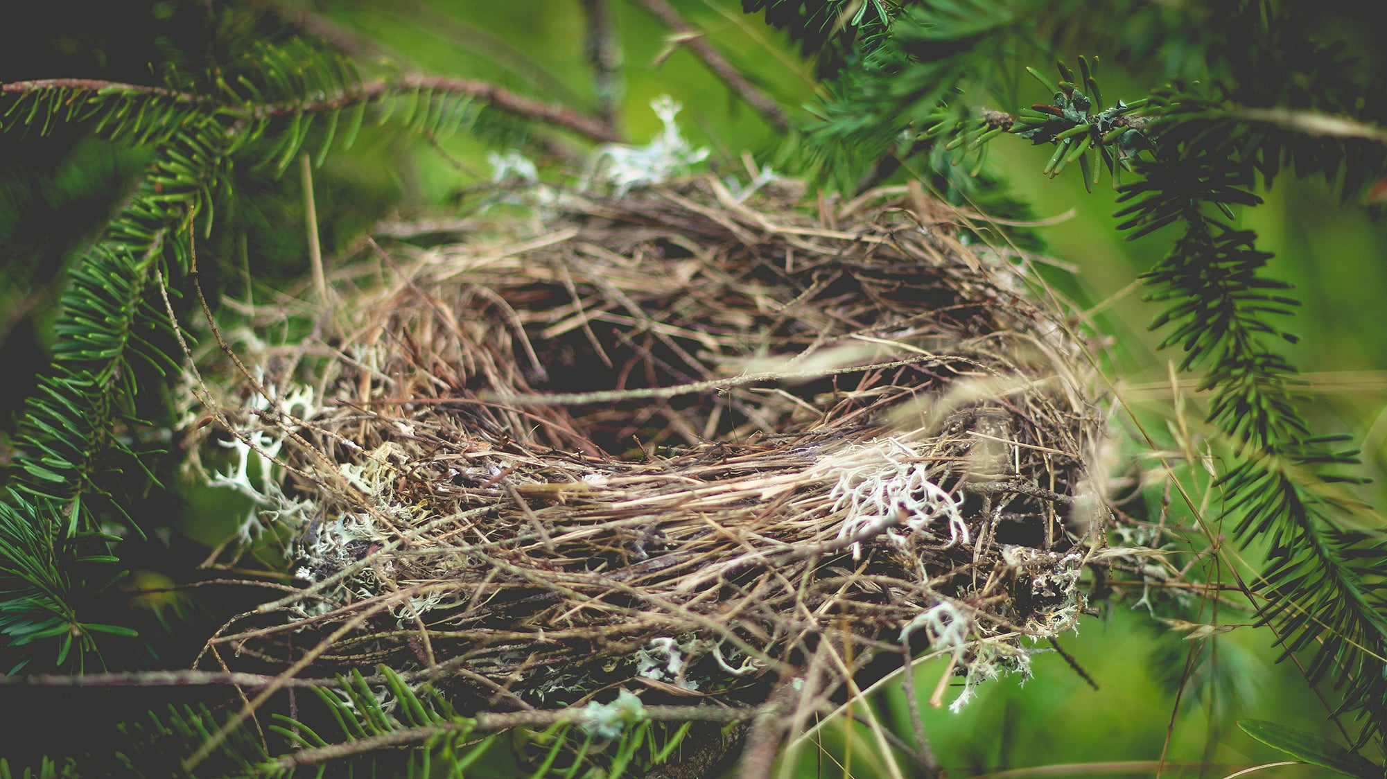 From Nesting To Nesting
