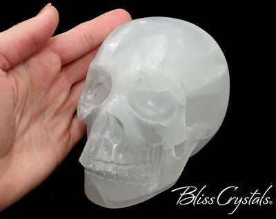 Selenite Crystal Skull 5 inch Hand carved Polished 2 lb Moonglow Healing Crystal and Stone #SS61 #shrm