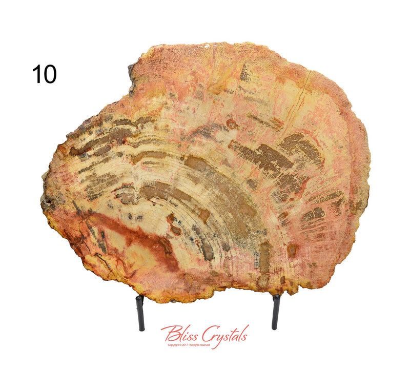 FLASH SALE - Tucson Reveal: Petrified Wood Polished Slabs #PP24
