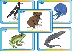VIC Modern Cursive Font Free Australian Animal Alphabet Flashcards for VIC / WA and NT Handwriting