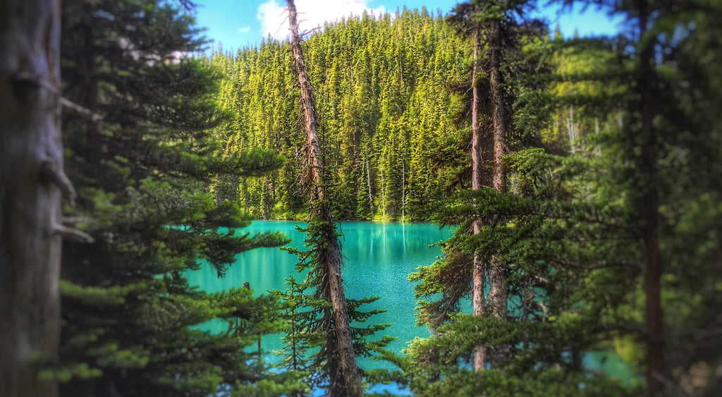 Garibaldi Lake Hike | Livv Adventures | Garibaldi Lake