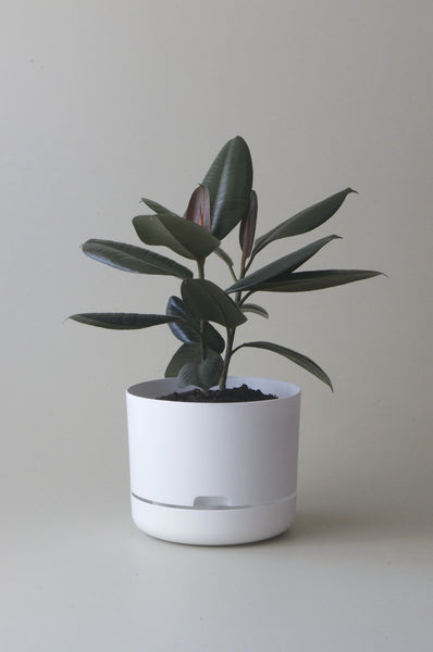 Mr Kitley Selfwatering Plant Pots White 250mm