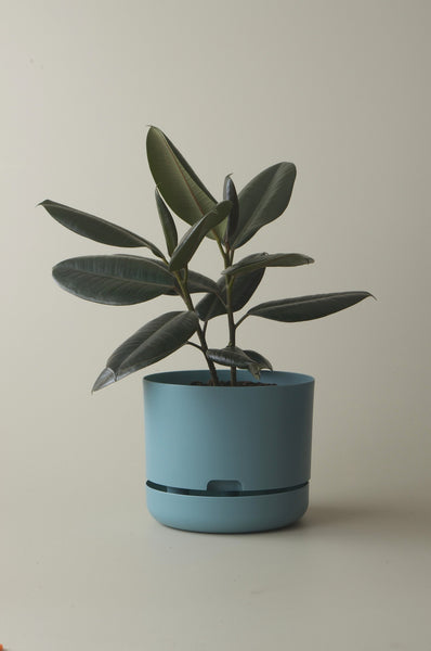 Mr Kitly Selfwatering Plant Pots Pond Blue 250mm