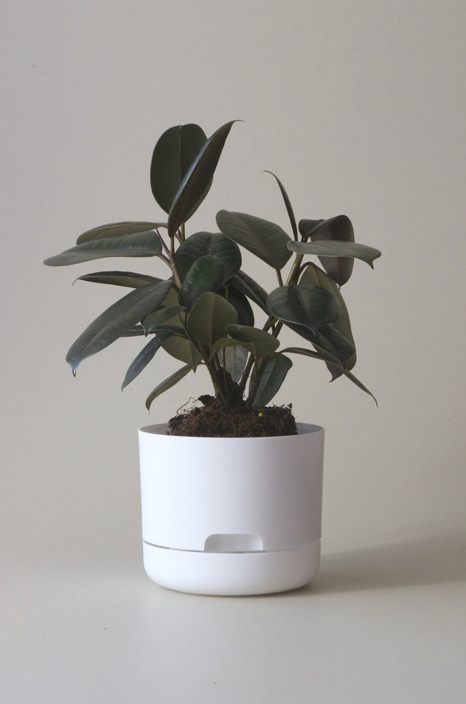 Mr Kitly Selfwatering Plant Pots White 170mm