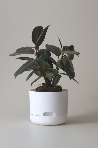 Mr Kitley Selfwatering Plant Pots White 170mm