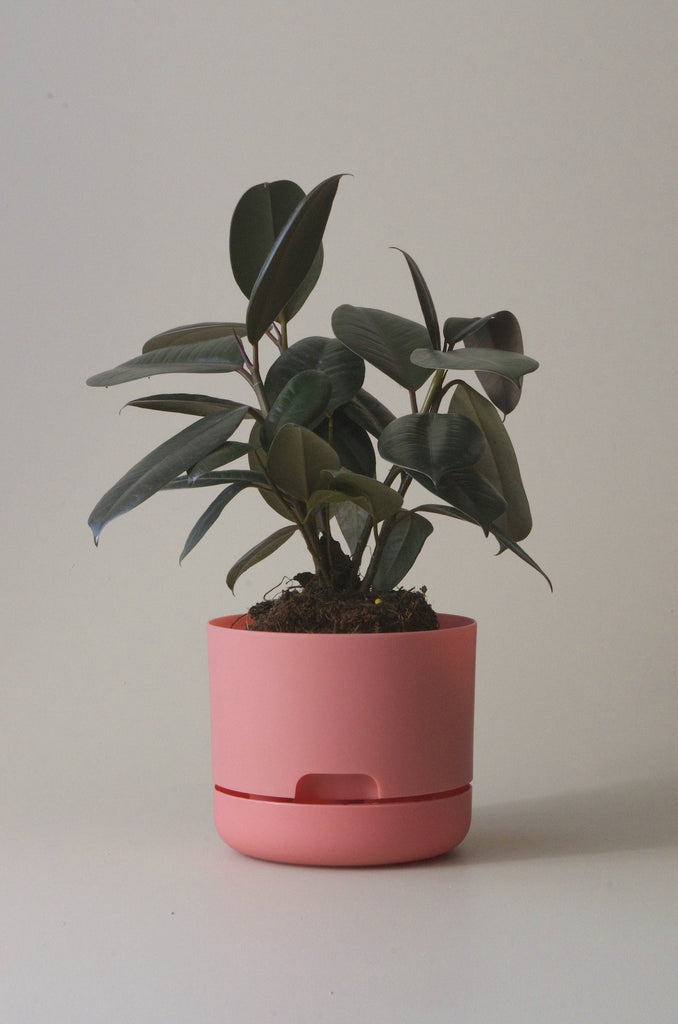 Mr Kitley Selfwatering Plant Pots Persimmon 170mm