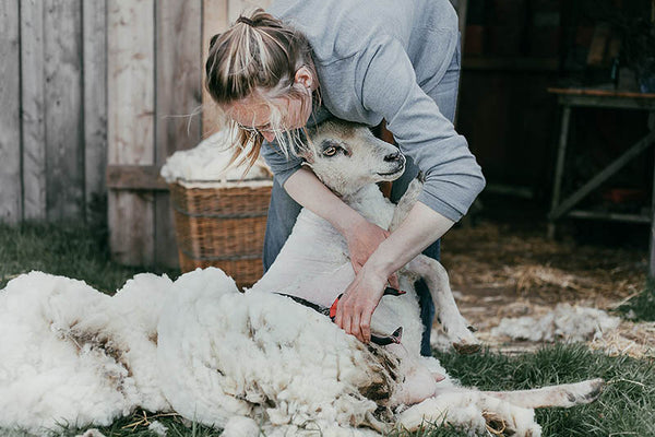 SHEARING ON THE ORGANIC SMALL HOLDING