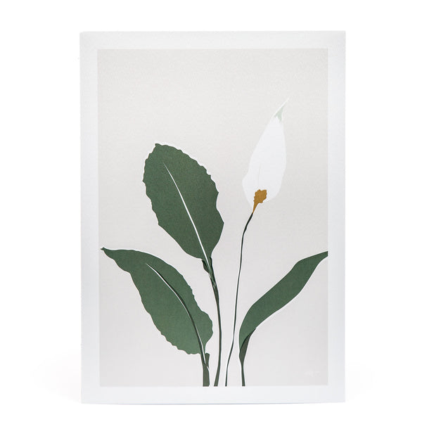 Peace Lily Artist Print