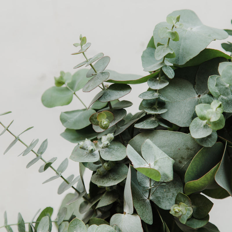 Fresh Eucalyptus Wreath & Garland Workshop - Saturday 28th November