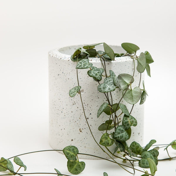 Large Concrete Planter - garden - shop online uk | Travelling Basket