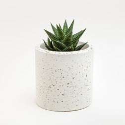 Medium Concrete Planter - garden - shop online uk | Travelling Basket