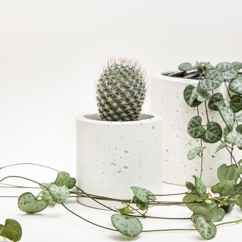 Small Concrete Planter - garden - shop online uk | Travelling Basket
