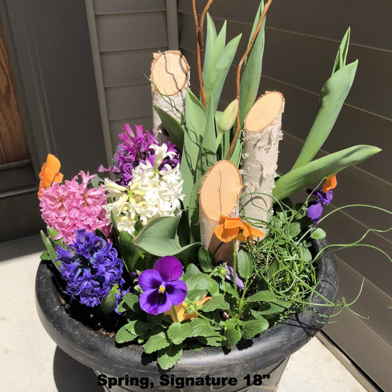 "Planter Delivery Subscription-Planter-Simple and Grand-Full Sun-SELECT (11""-13"") - Budget Friendly-Simple and Grand"