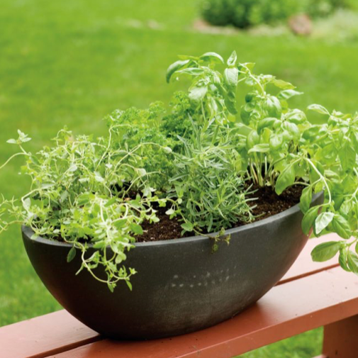 Fresh Herb Garden-Seasonal Decor-Simple and Grand-Simple and Grand