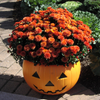 Pumpkin Fall Centerpiece-Simple and Grand-Simple and Grand