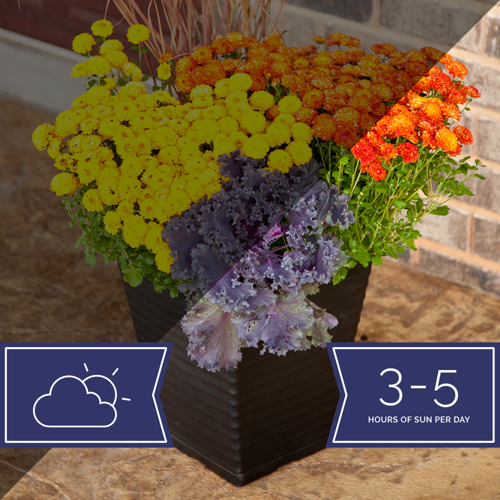 "Part Sun / Part Shade-Planter-Simple and Grand-12"" ROUND Classic Grower pot-Simple and Grand"