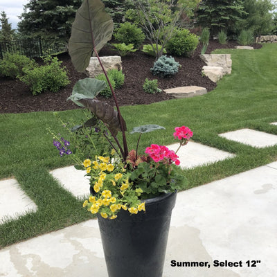 "Planter Delivery Subscription-Simple and Grand-SELECT (11""-12"") - Budget Friendly-Round-Full Sun-Simple and Grand"