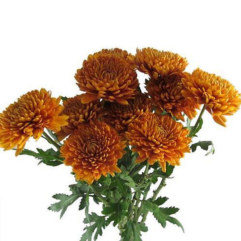 "Orange Bronze Mum-Simple and Grand-12""-Simple and Grand"
