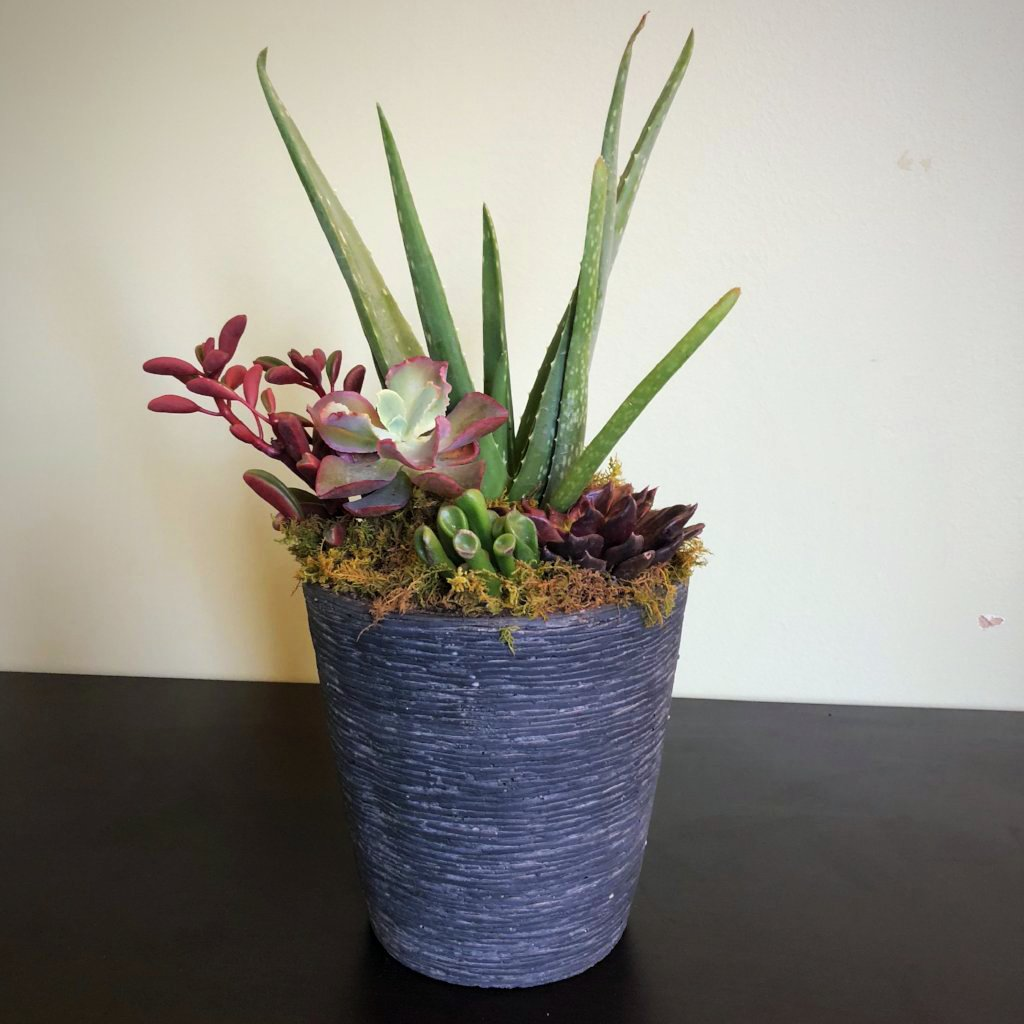 "Succulent Pot, 7""x7""-Simple and Grand-Simple and Grand"