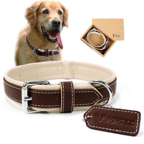 Cushioned Dog Collar with Double D-Ring for Dog Tag